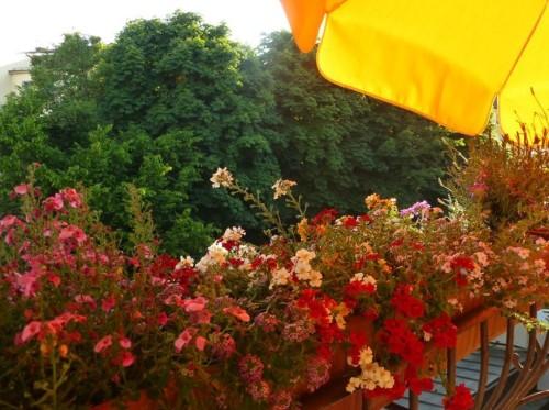 Sommerabende auf dem Blumenbalkon