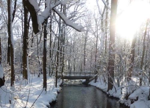 Impulsfrage im Februar: Winterschlaf
