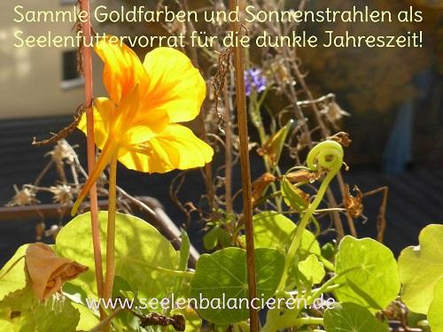 Futtervorrat für die Seele: Goldfarben und Sonnenstrahlen