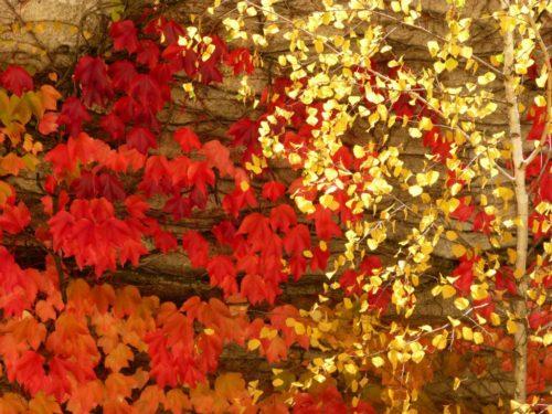 Impulsfragen im November: Gold